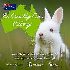 Ban on Animal Testing for Cosmetics